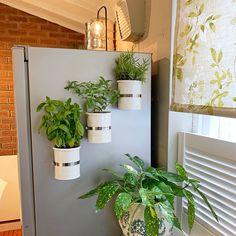 Magnetic self-watering planter. Magnetic self-watering planter. Self Watering Plants, Fridge Decor, Plastic Plant Pots, Küchen Design, Design Ideas, Diy On A Budget, Plant Decor, White Flowers, Flower Pots