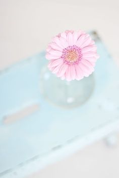 Adorable pink daisy in aqua bud vase :)