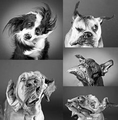 Frenzy Dogs  I just start laughing when I see this. I wish I could capture my dog when he does this!