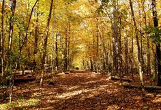 "Check out my art piece ""Golden Tunnel"" on crated.com Puslinch Ontario Canada #art #photography #nature #autumn #trees"