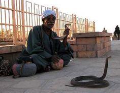 Snakes of Egypt