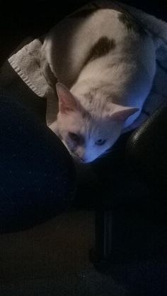 Lost Cat - Unknown - Mississauga, ONTARIO, Canada L5H 2S6