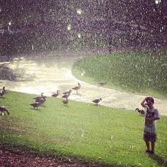 Summer rain, Frognerparken Oslo, Norway