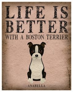 Life is better with a Boston Terrier...they are definitely an enjoyable breed!