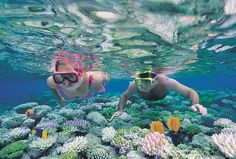 Go snorkeling through a coral reef. Terrified of doing this.