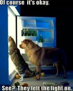 34 Best Maymo The Lemon Beagle Images Beagle Dog Lemon Beagle