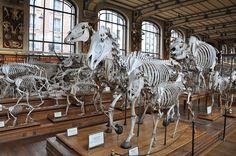 Museum of Natural History  Paris, France