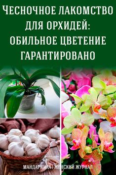 Orchid Care, Flowers, Plants, Sodas, Orchids, Gardening, Floral, Royal Icing Flowers, Florals