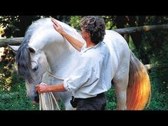 ABOUT US: We are broadcasting and informing about the nature philosopher Klaus Ferdinand Hempfling. He is worldwide known because of his unique natural way o. Pretty Horses, Horse Love, Beautiful Horses, Horse Training, Ferdinand, Barns, Breathe, Liberty, Trainers