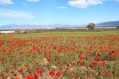 """Almería, Níjar, Cabo de Gata, Paraje Natural    36° 46' 19.69"""" N  2° 12' 30.82"""" W  Cortesía de JoséÁngel De La Peca"""