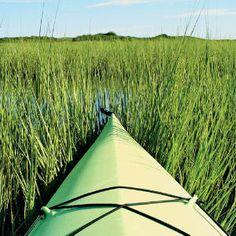 "Green Day - ""We were paddling on this great Block Island salt pond that was so peaceful and quiet. The greens made the ideal camouflage                                      for me to come right up to egrets and other birds without disturbing them. Dragonflies loved the color of the kayak so much                                      they kept landing all around me."""