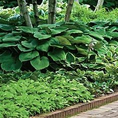 Nothing uplifts your yard like a beautiful garden.  It doesn't have to expensive.  Here are some great ideas.