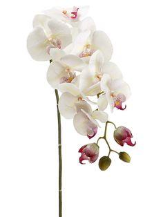 Phalaenopsis Orchid Spray in Cream   Wedding Flowers silk flowers real touch flowers wedding orchids only $10.99