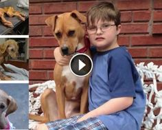 Hopeless Dog Overcomes Severe Abuse And Helps An Autistic Boy Cope With Life - http://eradaily.com/hopeless-dog-overcomes-severe-abuse-helps-autistic-boy-cope-life/