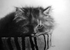 Pencil drawings of Cats by Paul Lung