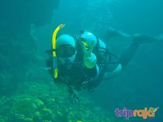 Scuba Diving in Goa is one of the most popular watersport of Goa. If you are planing your trip to Goa than you must experience different watersport activities in Goa like scuba diving Snorkeling etc Online Travel Booking, Weather In India, Backpacking India, India Culture, Visit India, Adventure Activities, Boat Tours, India Travel, Marine Life