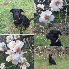 My favorite flowers and my baby #Ilovemydog #Blacky