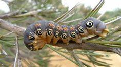 Image result for Moths
