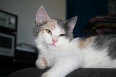 Stritzi Cat | Pawshake St. konrad