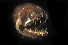 Some of the most alien-looking horrors hail from the lightless depths of the ocean -- one of the places in Zack's world where cacodaimons can slide from their reality to our own.