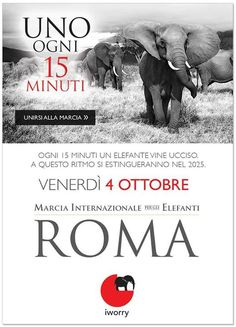 #Roma, piazza del #Pantheon – 4/10/2013  h 14.00 #Marcia per gli #elefanti
