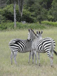 Love my stripes