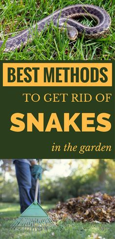 Best methods to get rid of snakes in the garden. Best methods to get rid of snakes in the garden. Garden Snakes, Slugs In Garden, Garden Bugs, Garden Insects, Garden Pests, Herb Garden, Garden Tools, Organic Gardening, Gardening Tips
