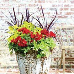 "Geraniums Built for the South    (For 21"" planter)                            1) 2- 6"" pots 'Design A Line"" cordyline                                    2) 2- 4"" ""Wasabi' coleus                                                 3) 1-1 gallon 'Callipe Dark Red' geranium                               4) 1-4"" 'Sweet Caroline Light Green' sweet potato vine (clip vine every few weeks)                   Full to partial sun"