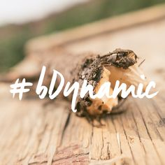 There's nothing like a root harvest! #bDynamic and harvest your own roots. #biodynamicfarming #freshroot #harvest #organicfarming