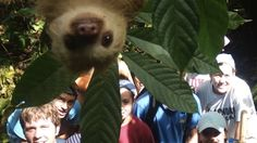 Cute Baby Sloth Photobombs a Group Picture