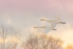 winter sunrise by tatsuo yamaguchi on 500px