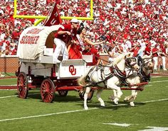 The real OU mascots! BOOMER SOONER!