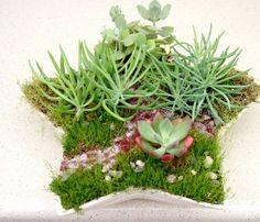 star shaped succulent garden