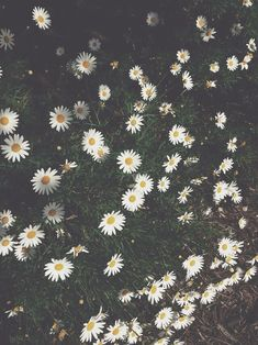 tumblr photography - Google Search