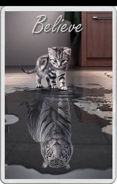 FRIDGE MAGNET grey tabby Kitten reflection white lion inspirational BELIEVE