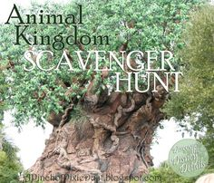 A Pinch of Pixie Dust: Animal Kingdom Scavenger Hunt