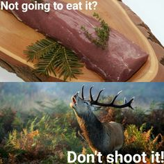 Not going to eat it? Don't shoot it! #deer #meat #hunting