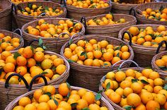   Baskets of mandarin oranges.   Local specialty fruit of XiaoShing, China.