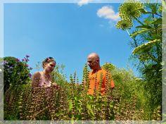 Un tour au jardin médicinal d'Althea Provence : Vert-Citron