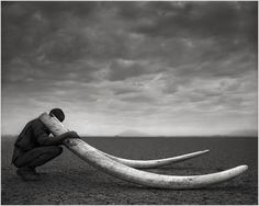 This photograph features one of the rangers employed by Big Life Foundation, the Foundation Nick Brandt started in 2010. The ranger holds the tusks of an elephant killed by poachers in the years prior to the Foundation's inception. #ivoryforelephants #elephants #stoppoaching