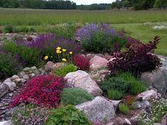 Eigenlijk een paar rotsen nodig voor rechtsvoor! Klein rotsentuintje met Engels gras en misschien wel edelweiß!