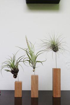 Flower Vases, Flowers, Plant Shelves, Garden Pots, Indoor Plants, Planter Pots, Shelf, Diy Crafts, Gift Ideas