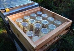 How to encourage honeybees to build honeycomb inside glass jars. Via Lovely Greens