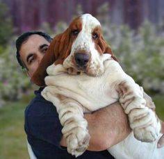 Holy Moly!  My boy is right around 68 pounds & he's not nearly this big!  I adore the completely unimpressed look on the basset's face!  LOL!