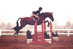 I need a new horse, preferably one that jumps like this haha