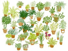 Houseplants by Leah Reena