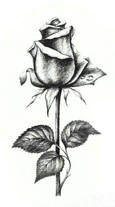 Realistic Flower Drawing, Beautiful Flower Drawings, Pencil Drawings Of Flowers, Flower Sketches, Floral Drawing, Pencil Art Drawings, Art Drawings Sketches, Rose Drawing Pencil, Flower Sketch Pencil