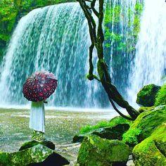 Beautiful Kumamoto. Rainy day🌿🌿 ・ ・ 熊本県の鍋ヶ滝はとても有名です🌿 ・ 松嶋菜々子さんの #生茶 のCMのロケ地なので🌿🌿✨ ・ 晴れの日も綺麗だけど、雨の日が好きです☂️ ・ 水の量が増えるから、マイナスイオンがたくさん出ている気がする🌿 ・ それに雨の日は、緑が余計深くなるので、とても美しい☂️🌿🌟 ・ 熊本県、オススメの場所です🌿🌟 ・ ・ 北海道も地震がありましたね😢💦 ・ こんなに大きな地震が日本は頻繁におこる国だったかな💦 ・ 地震って本当に人ごとではないです😞