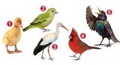 Test Image, Wildlife, Animals, Scorpion, Feng Shui, Chakra, Random, Green, Funny Life Lessons