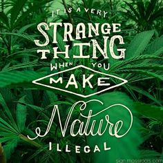 This is especially true when you think there is not any other illegal plants, to my knowledge, such as Foxglove (digitalis) or Belladonna (poisonous). Really is crazy!